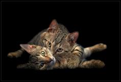 Max e Minu