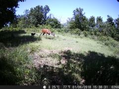 Fototrappola cervo