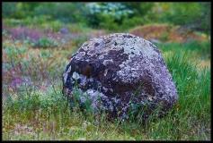 Licheni su roccia