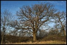 Gli alberi di cascina costa casella