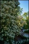 Giardino Botanico Reaale