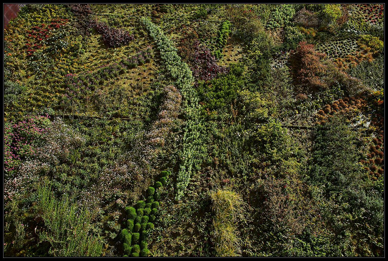 Amazing giardino verticale with giardino verticale - Piante per giardino verticale ...