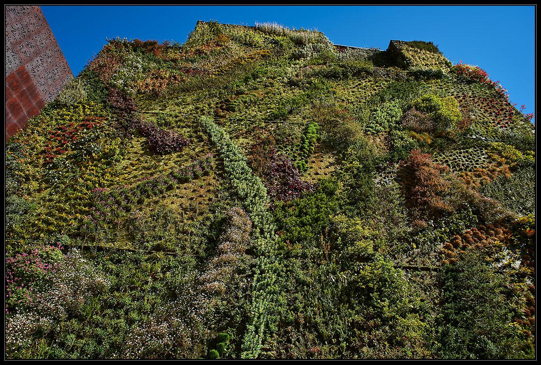 Giardino verticale alberto zafferano fotografo - Giardino verticale madrid ...