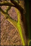 Licheni Verdi