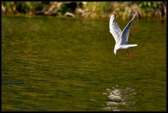 Pesca di fiume